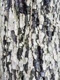 Macro texture d'écorce d'arbre images stock