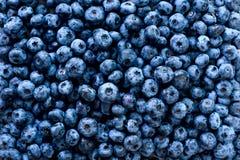 Macro texture d'haut étroit de baies de myrtille Conception de frontière Été, vitamine, vegan, concept végétarien Nourriture sain image libre de droits
