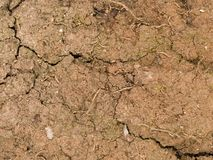 Macro texture - earth - dry and cracked Stock Photo