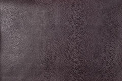 Macro texture of genuine leather Royalty Free Stock Photo