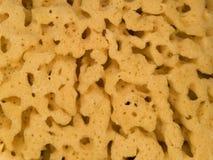 Macro texture - household - sponge Stock Images