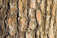 Macro Texture of old wooden tree trunk in horizontal frame Royalty Free Stock Photography