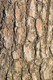 Macro Texture of old wooden tree trunk Stock Photo