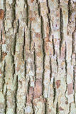 Macro Texture of old wooden tree trunk Royalty Free Stock Photography
