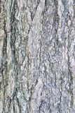 Texture of old wooden tree trunk in vertical frame Royalty Free Stock Photos