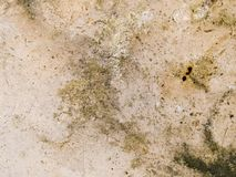 Macro texture - stone - mottled Stock Photography