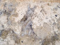 Macro texture - stone - mottled rock Stock Images