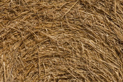 Macro texture of straw in haystack. Royalty Free Stock Photography