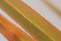 Macro texture of striped green leaves in horizontal frame Stock Photography