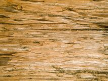 Macro texture - wood - grain Stock Images