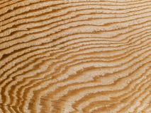 Macro texture - wood - grain Stock Photo