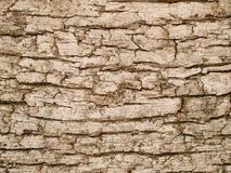 Macro texture - wood - tree bark Stock Photography