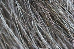 Macro texture of wool black wild Altaic yak. Royalty Free Stock Image