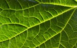 Leaf ackground Stock Image
