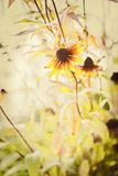 Macro Textured Floral Background Coneflower Stock Images