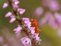 Macro of tiny orange bug Stock Photo