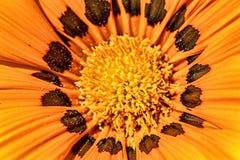 Macro tir de fleur orange Images libres de droits