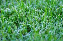 Macro tir de gel sur la pelouse pendant l'hiver Photos libres de droits