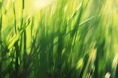 Macro tir de l'élevage naturel Zone d'herbe Image stock