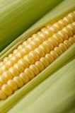Macro tir de maïs photo stock