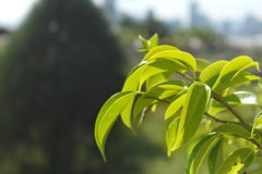 Macro tir des feuilles vertes photos stock