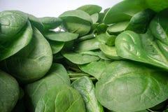 Macro tir des feuilles vertes d'épinards Groupe de feuilles végétales d'épinards empilées sur l'un l'autre Agriculture urbai image stock