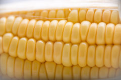 Macro tir des grains mûrs de maïs Photographie stock