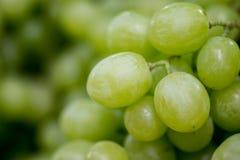 Macro tir des raisins vert-jaunes de nouvelle récolte à vendre image stock