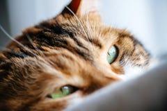 Macro tir en gros plan de sommeil mignon de chat Images libres de droits
