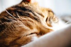 Macro tir en gros plan de sommeil mignon de chat Photographie stock libre de droits