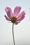 Macro tir superbe de fleur pour le beau fond Images stock