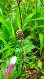 Macro tirs : mon jardin images stock