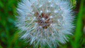 Macro tirs : mon jardin Photo libre de droits