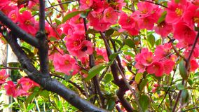 Macro tirs : mon jardin image stock