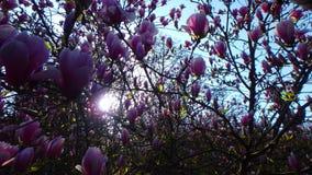 Macro tirs : mon jardin Image libre de droits