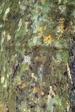 Macro tree bark Stock Photo