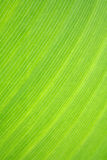 Macro of a tropical leaf Stock Photos