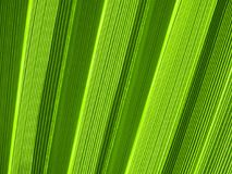 Tropical palm leaf texture Stock Image