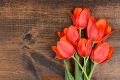 Macro tulips on wood Royalty Free Stock Photos