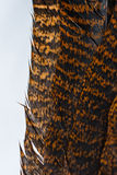 Macro Turkey Feathers Royalty Free Stock Photo