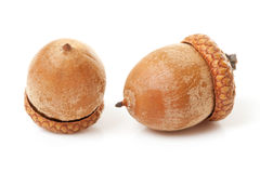 Macro of two acorns Royalty Free Stock Image