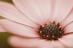Macro uitstekende retro van de bloemclose-up Stock Afbeeldingen