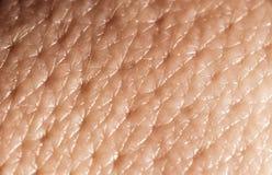 Macro umana della pelle Fotografie Stock