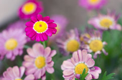 Macro van bloemen II Stock Afbeeldingen
