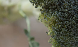 Macro van broccolibloemen wordt geschoten in een daglicht dat stock fotografie