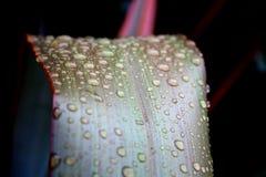 Macro van de Dalingen van het Water op Bladeren royalty-vrije stock fotografie