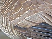 Macro van de staartveren van de Canadese gans royalty-vrije stock foto
