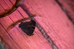 Macro van donkere bruine vlinderzitting wordt geschoten op houten deuren op een achtergrond van baksteen die wal Royalty-vrije Stock Foto