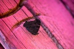Macro van donkere bruine vlinderzitting wordt geschoten op houten deuren op een achtergrond van baksteen die wal Royalty-vrije Stock Fotografie