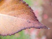 Macro van een Blad Veranderende Kleur stock fotografie